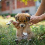 Quando devo começar a adestrar meu cão filhote?