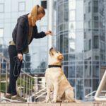 Gosta de pets? Veja como se tornar um adestrador de cachorro!