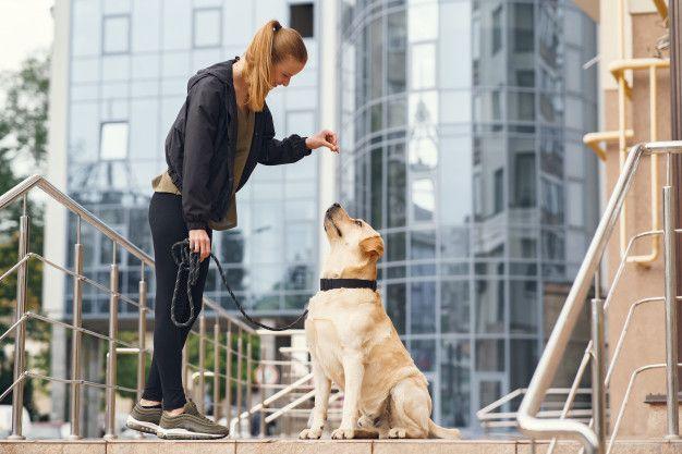 adestrador-de-cachorro